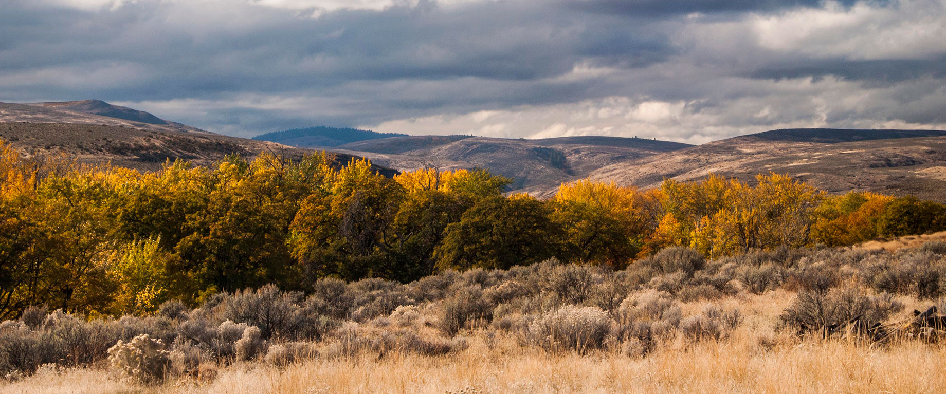 Cowiche Canyon Conservancy Hiking Trails Shrub-Steppe Yakima, WA Conservation Photo: David Hagen