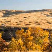 Cowiche Canyon Conservancy Snow Mountain Ranch Hiking Trails Yakima, WA Conservation Photo: David Hagen