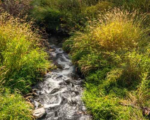 Cowiche Canyon Conservancy Creek Hiking Trails Yakima, WA Conservation Photo: David Hagen
