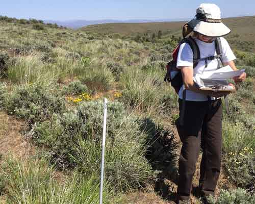 Cowiche Canyon Conservancy NORTH FORK COWICHE GRAZING PROJECT Site Yakima WA