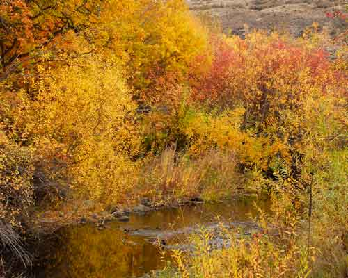 Cowiche Canyon Conservancy Snow Mountain Ranch Fall Colors Hiking Recreation Shrub-Steppe Photo: David Hagen
