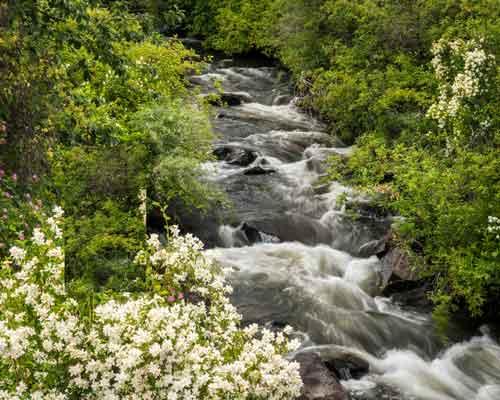 Cowiche Canyon Conservancy Cowiche Creek Mock Orange Recreation Shrub-Steppe Yakima WA Photo: David Hagen