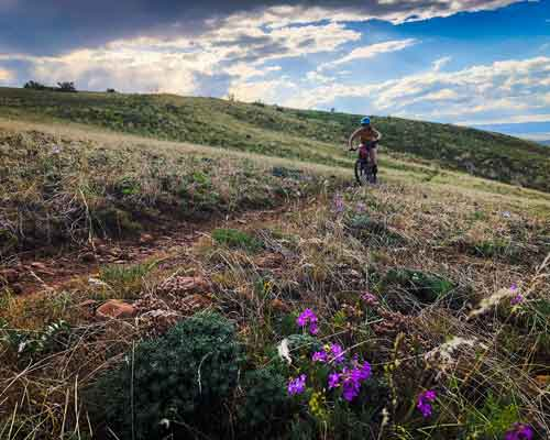 Rocky Top Mountain Biking Trails Cowiche Canyon Conservancy Photo: Shannon Mahre Wildflowers Spring