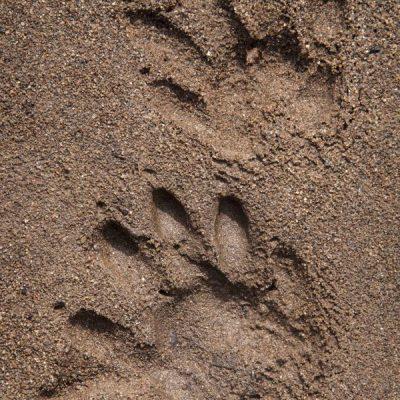 Beaver Tracks, Snow Mtn Ranch_DH38070_edited-2