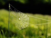 19-20 Nature's Storytellers Poster Spider Web