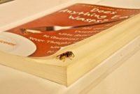 Wasp - Wandering & Wondering by Nancy Lust